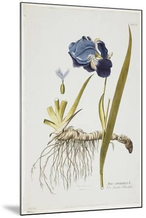 Iris Germanica, from Icones Plantarum Medicinalium, 1788-1812-Joseph Jacob Plenck-Mounted Giclee Print