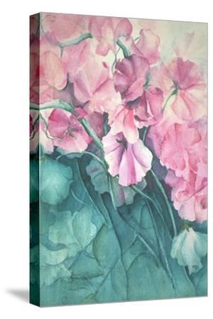 Sweet Peas, Pink Pride-Karen Armitage-Stretched Canvas Print