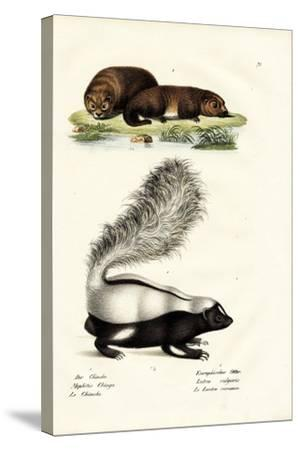 Molina's Hog-Nosed Skunk, 1824-Karl Joseph Brodtmann-Stretched Canvas Print