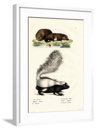 Molina's Hog-Nosed Skunk, 1824-Karl Joseph Brodtmann-Framed Giclee Print