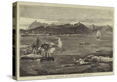 Shark Shooting at Port Louis, Mauritius-Joseph Nash-Stretched Canvas Print