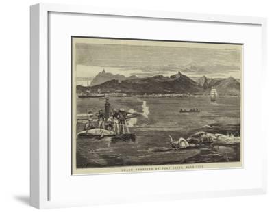 Shark Shooting at Port Louis, Mauritius-Joseph Nash-Framed Giclee Print