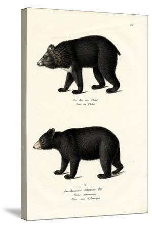 Himalayan Black Bear, 1824-Karl Joseph Brodtmann-Stretched Canvas Print