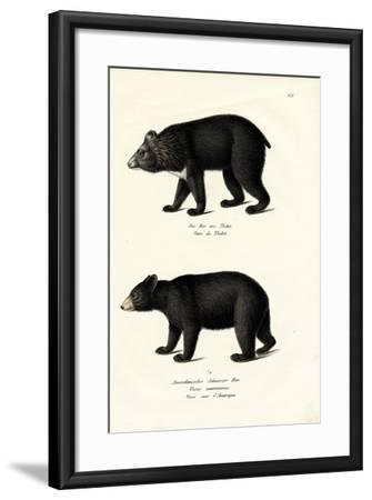 Himalayan Black Bear, 1824-Karl Joseph Brodtmann-Framed Giclee Print