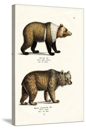 European Brown Bear, 1824-Karl Joseph Brodtmann-Stretched Canvas Print