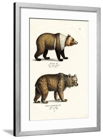 European Brown Bear, 1824-Karl Joseph Brodtmann-Framed Giclee Print