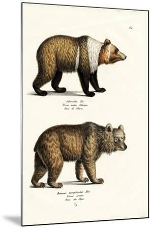 European Brown Bear, 1824-Karl Joseph Brodtmann-Mounted Giclee Print