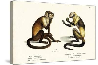 Capuchin Monkey, 1824-Karl Joseph Brodtmann-Stretched Canvas Print