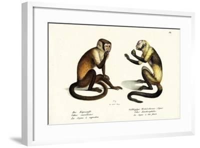Capuchin Monkey, 1824-Karl Joseph Brodtmann-Framed Giclee Print