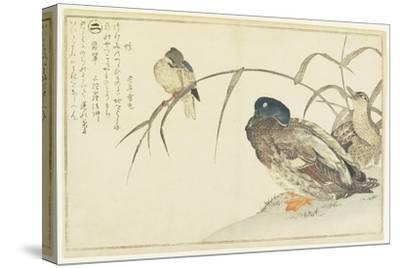 Mallards and a Kingfisher, 1790-Kitagawa Utamaro-Stretched Canvas Print