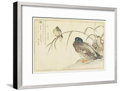Mallards and a Kingfisher, 1790-Kitagawa Utamaro-Framed Giclee Print