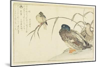 Mallards and a Kingfisher, 1790-Kitagawa Utamaro-Mounted Giclee Print