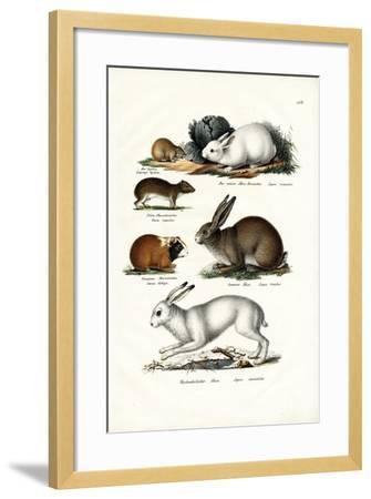Ogotona Hare, 1824-Karl Joseph Brodtmann-Framed Giclee Print