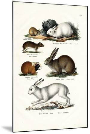 Ogotona Hare, 1824-Karl Joseph Brodtmann-Mounted Giclee Print