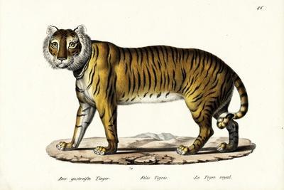 Royal Tiger, 1824-Karl Joseph Brodtmann-Framed Giclee Print