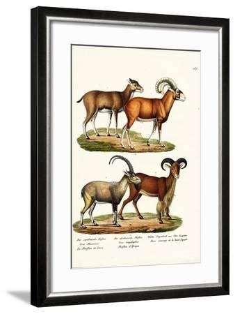 Mouflon, 1824-Karl Joseph Brodtmann-Framed Giclee Print