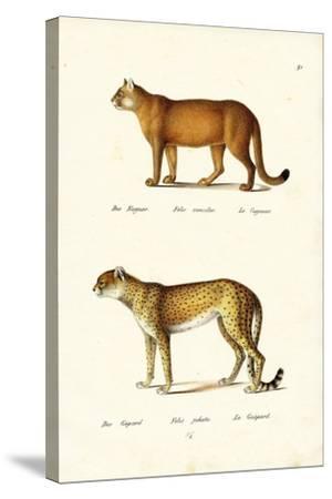 Cougar, 1824-Karl Joseph Brodtmann-Stretched Canvas Print