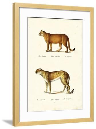 Cougar, 1824-Karl Joseph Brodtmann-Framed Giclee Print