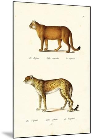 Cougar, 1824-Karl Joseph Brodtmann-Mounted Giclee Print