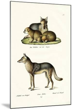 Jackal, 1824-Karl Joseph Brodtmann-Mounted Giclee Print