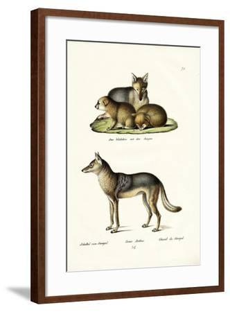 Jackal, 1824-Karl Joseph Brodtmann-Framed Giclee Print