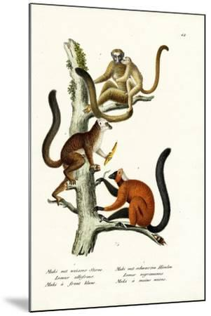 White-Fronted Lemur, 1824-Karl Joseph Brodtmann-Mounted Giclee Print
