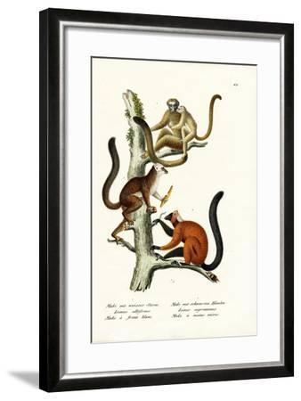 White-Fronted Lemur, 1824-Karl Joseph Brodtmann-Framed Giclee Print