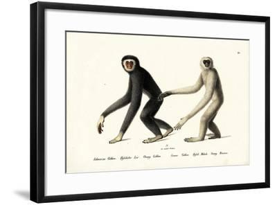 White-Handed Gibbon, 1824-Karl Joseph Brodtmann-Framed Giclee Print