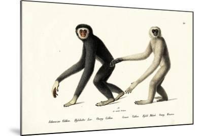 White-Handed Gibbon, 1824-Karl Joseph Brodtmann-Mounted Giclee Print