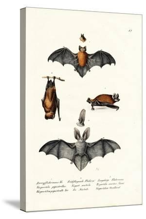 Common Pipistrelle, 1824-Karl Joseph Brodtmann-Stretched Canvas Print