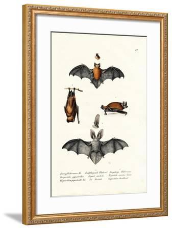 Common Pipistrelle, 1824-Karl Joseph Brodtmann-Framed Giclee Print