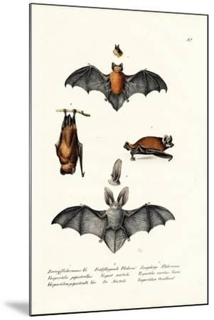 Common Pipistrelle, 1824-Karl Joseph Brodtmann-Mounted Giclee Print