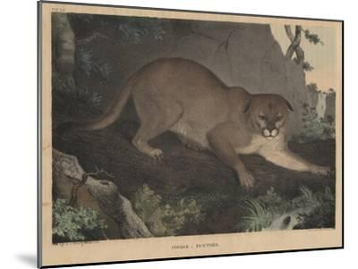Cougar or Panther-Mannevillette Elihu Dearing Brown-Mounted Giclee Print