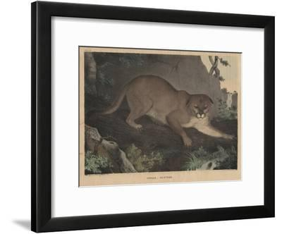 Cougar or Panther-Mannevillette Elihu Dearing Brown-Framed Giclee Print