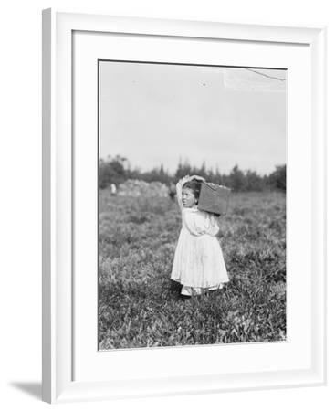 Eight Year Old Jennie Camillo from Philadelphia Picking Cranberries at Theodore Budd's Bog-Lewis Wickes Hine-Framed Photographic Print