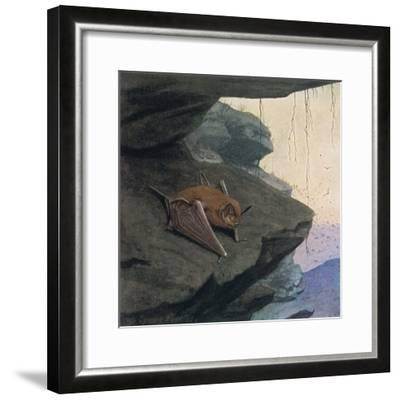 Free Tailed Bat-Louis Agassiz Fuertes-Framed Giclee Print