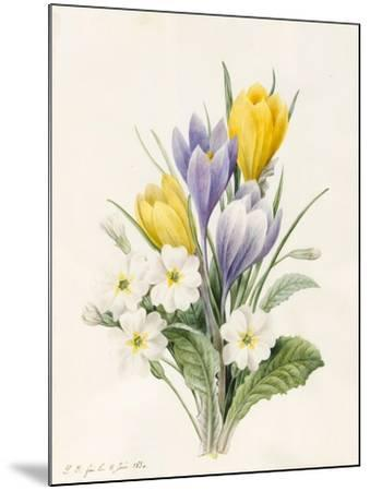 White Primroses and Early Hybrid Crocuses, 1830-Louise D'Orleans-Mounted Giclee Print