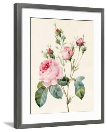 Pink Rose and Buds, 1832-Louise D'Orleans-Framed Giclee Print