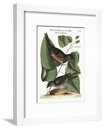The Towhe Bird. the Cowpen Bird, 1749-73-Mark Catesby-Framed Giclee Print