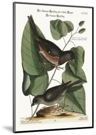 The Towhe Bird. the Cowpen Bird, 1749-73-Mark Catesby-Mounted Giclee Print