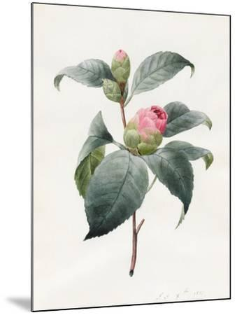 Camellia, 1826-Louise D'Orleans-Mounted Giclee Print