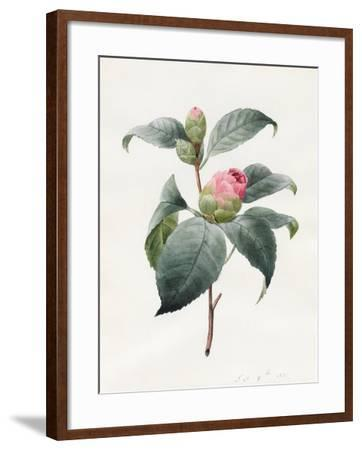 Camellia, 1826-Louise D'Orleans-Framed Giclee Print