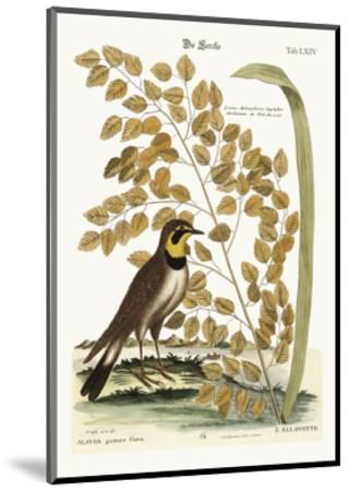 The Lark, 1749-73-Mark Catesby-Mounted Giclee Print