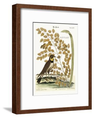 The Lark, 1749-73-Mark Catesby-Framed Giclee Print