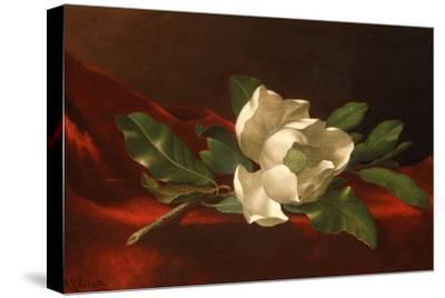 Magnolia, C.1885-95-Martin Johnson Heade-Stretched Canvas Print