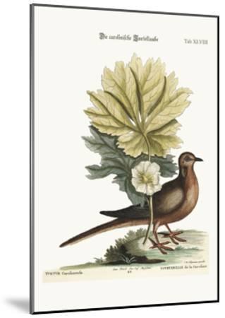 The Turtle of Carolina, 1749-73-Mark Catesby-Mounted Giclee Print