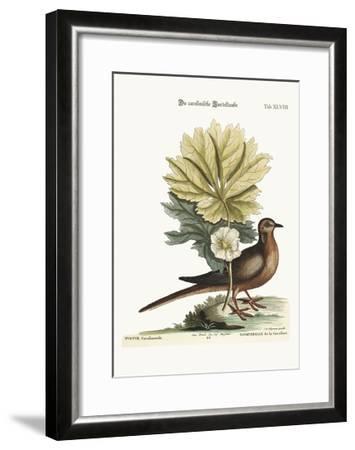 The Turtle of Carolina, 1749-73-Mark Catesby-Framed Giclee Print