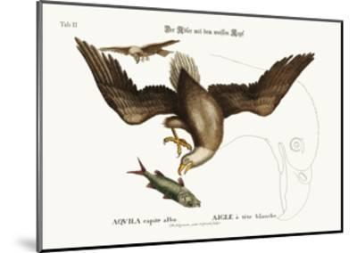 The White-Headed Eagle, 1749-73-Mark Catesby-Mounted Giclee Print