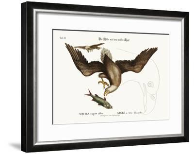 The White-Headed Eagle, 1749-73-Mark Catesby-Framed Giclee Print