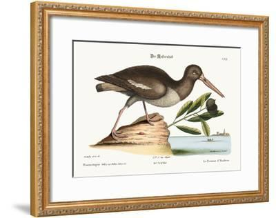 The Oyster Catcher, 1749-73-Mark Catesby-Framed Giclee Print
